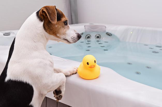 Kupanje pasa na zabavan način