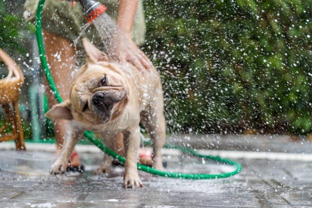 Kupanje psa napolju