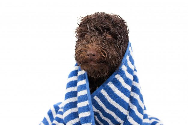 Kupanje pasa tamne dlake