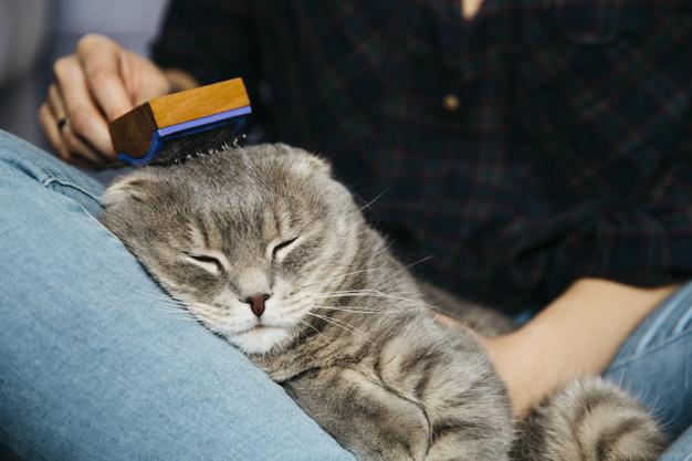 Cetkanjem protiv ljinjanja mačaka