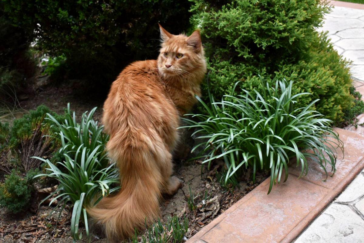 Opadanje dlake kod mačaka može da se kontroliše