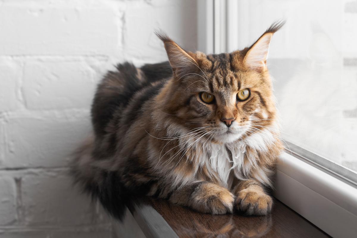 Linjanje mačaka koje žive u kući