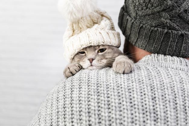 Linjanje mačaka pod kontrolom