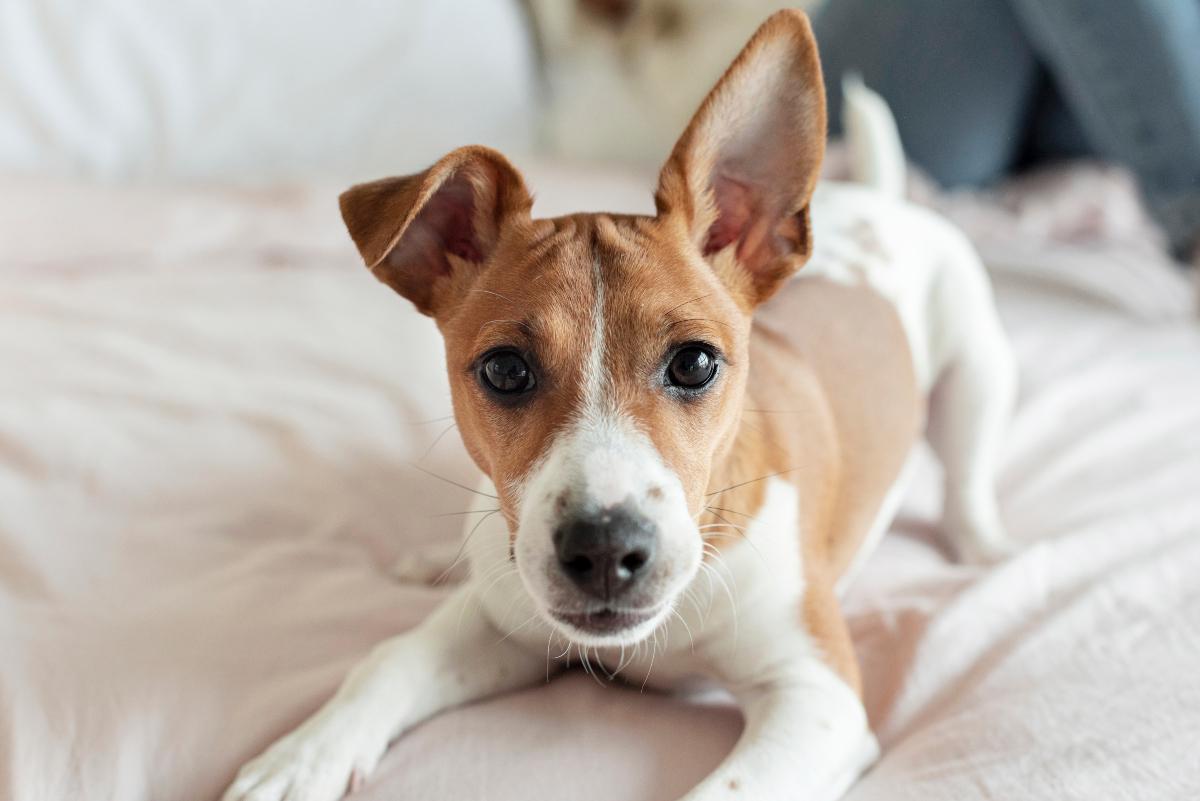 Međunarodni dan pasa