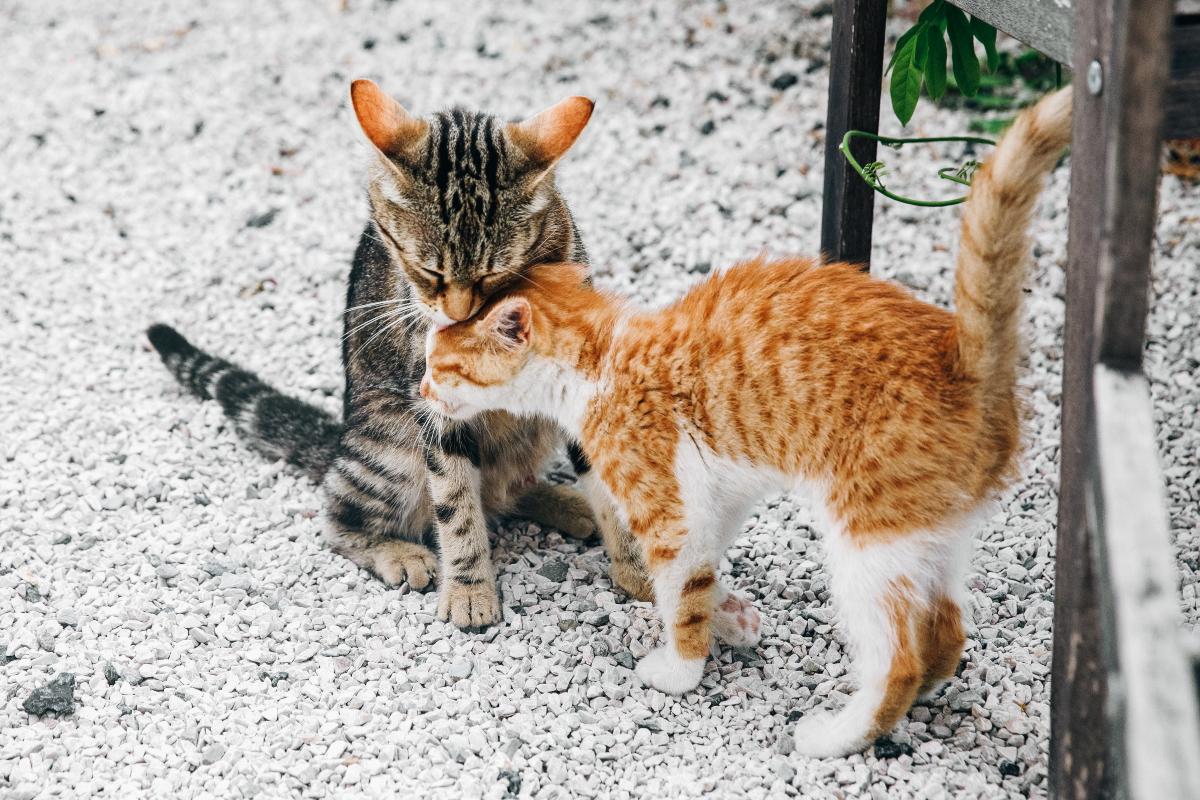 Domaće mačke - međunarodni dan mačaka