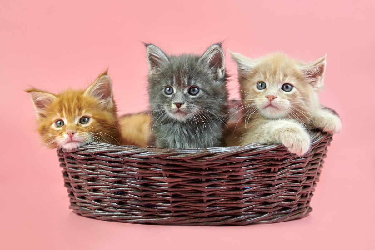 Međunarodni dan mačaka