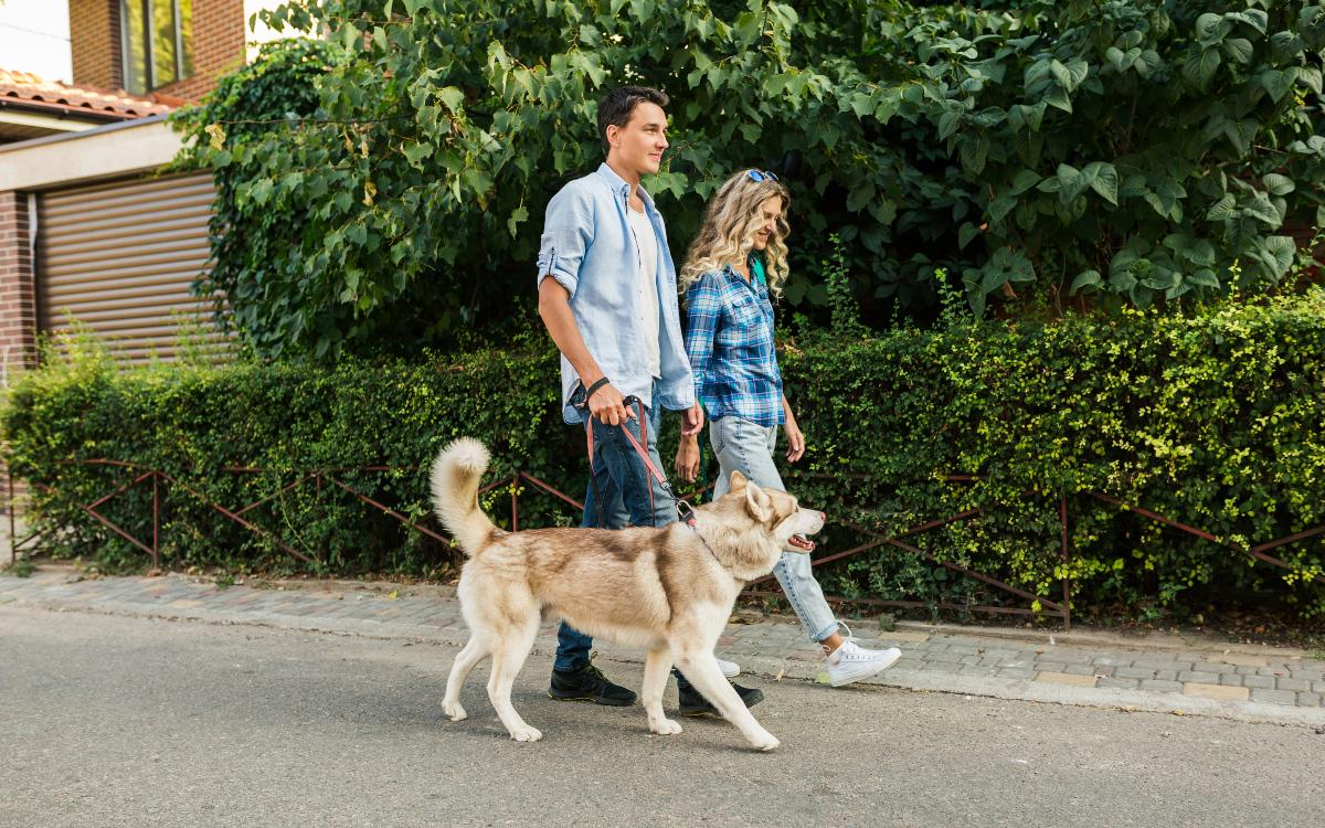 Šetanje sa psom u prirodi