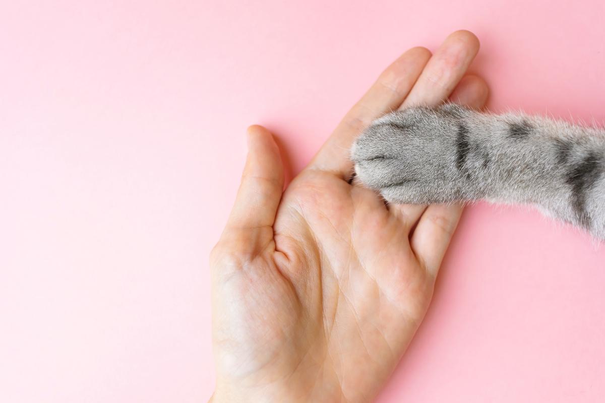 Kako obeležiti Svetski dan mačaka